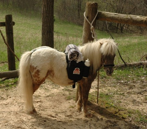 909130_mini-horse-backpacks_photo_1_1471113248_img.png