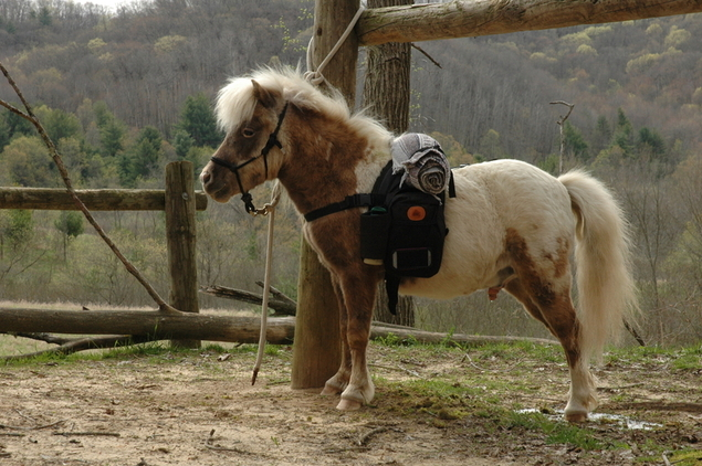 909130_mini-horse-backpacks_photo_7_1477937161_img.png